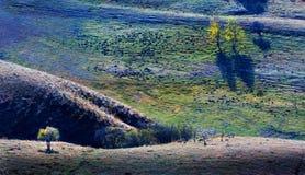 La luce e l'ombra della betulla Fotografie Stock