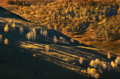 La luce e l'ombra della betulla Fotografia Stock Libera da Diritti