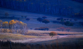 La luce e l'ombra della betulla Fotografia Stock