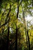 La luce nella foresta Fotografie Stock Libere da Diritti