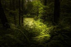 La luce nella foresta Immagine Stock Libera da Diritti