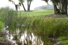 La luce riflette fuori dalla palude del nord pittoresca di Florida Immagini Stock