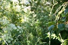 La luce solare cade attraverso gli alberi fotografia stock libera da diritti