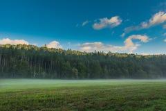 La luce solare completa gli alberi in valle nebbiosa Fotografia Stock