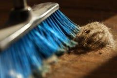 Palla della scopa, della polvere & della pelliccia sul pavimento di parquet Fotografia Stock