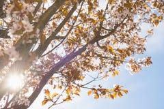 La luce solare lucida attraverso le filiali di albero Immagine Stock