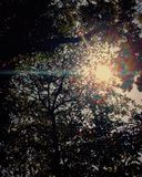La luce solare penetra la foresta immagine stock libera da diritti