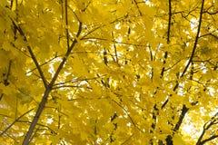 La luce solare splende attraverso gli alberi oltre un percorso che si trova in una foresta durante la stagione di caduta fotografia stock