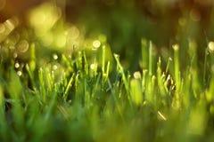 La luce solare splende tramite le lame di erba Immagine Stock Libera da Diritti