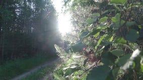 La luce solare viene tramite le foglie