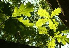 La luce verde Fotografia Stock