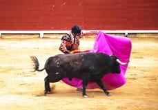La lucha de un toro y de un torero Corrida de Toros fotos de archivo