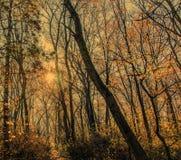 La lueur du soleil d'automne de matin photographie stock libre de droits