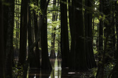 La Luisiana Dreamstate fotografia stock libera da diritti