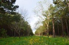 La Luisiana il campo oltre la chiara vista 02 fotografia stock libera da diritti