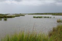 La Luisiana Marsh Grass fotografia stock libera da diritti