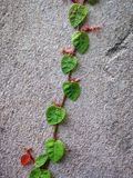 La lumaca lascia il verde della foglia Fotografia Stock
