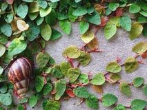 La lumaca lascia la foglia verde Fotografia Stock