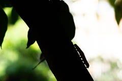 La lumaca scala l'albero con uno stile della siluetta fotografia stock libera da diritti