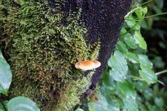 La lumaca sta strisciando sull'albero che pieno della pianta verde del muschio immagine stock libera da diritti