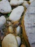 La lumaca sulla roccia Fotografie Stock Libere da Diritti