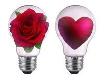 La lumière d'ampoule avec le coeur et la rose est sur le fond blanc Photographie stock libre de droits