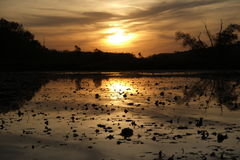 La lumière d'or du coucher du soleil Images stock