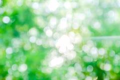 La lumière de matin Photographie stock libre de droits