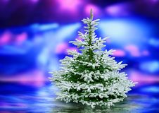 la lumière de Noël a polarisé l'arbre Photographie stock