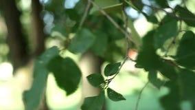 La lumière de rayons de Sun brille par des arbres et des branches de forêt Beau fond de flore exotique banque de vidéos