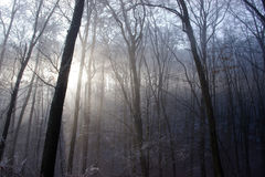 La lumière de Sun d'hiver vient par Forest Trees congelé Photo stock