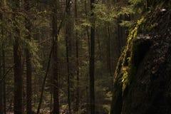 La lumière du soleil à l'intérieur d'une forêt riche accentuant la mousse verte sur les roches photographie stock libre de droits