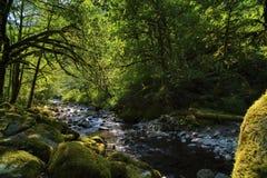 La lumière du soleil éclaire des ombres le long de Tanner Creek en gorge du fleuve Columbia Image stock