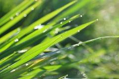 La lumière du soleil brille sur l'eau, causant le bokeh et blury Image stock