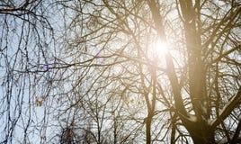 La lumière du soleil d'hiver par la neige a couvert des arbres dans une forêt Image libre de droits