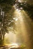 La lumière du Soleil Levant tombe dans les bois d'automne Image stock