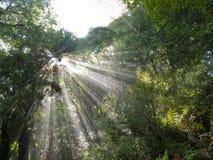 La lumière du soleil rayonne le faisceau par la jungle tropicale dense photos stock