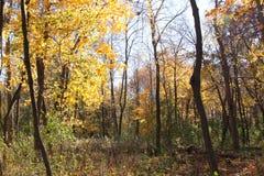 La lumière du soleil tombe par les arbres montrant les feuilles jaunes Photographie stock libre de droits