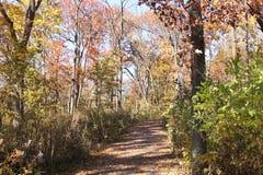 La lumière du soleil tombe par les arbres sur un chemin forestier large Photo libre de droits