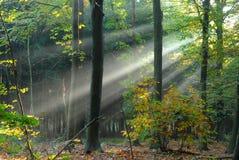 La lumière pleuvoir à torrents par les arbres image stock