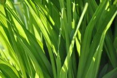 La lumière sur l'herbe Photo libre de droits