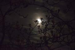 La luna brilla a través de las ramas de los árboles en la noche Imagen de archivo libre de regalías