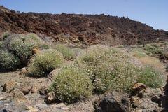 La luna del teide de las islas Canarias de Tenerife estropea Imagen de archivo