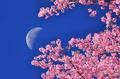 La luna en el cielo azul con primero plano de la flor Imagen de archivo