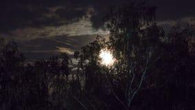 La Luna Llena se mueve en el cielo nocturno a través de las nubes y de los árboles oscuros Lapso de tiempo almacen de video