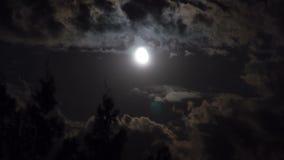 La Luna Llena se mueve en el cielo nocturno a través de las nubes y de los árboles oscuros Lapso de tiempo almacen de metraje de vídeo