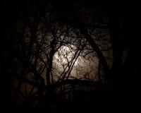 La luna piena ha impostato contro gli alberi alla notte. Fotografia Stock
