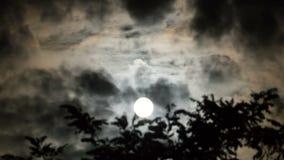 La luna piena si muove nel cielo notturno attraverso le nuvole e gli alberi scuri Timelapse video d archivio