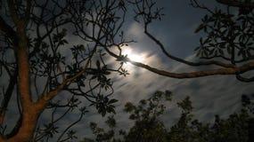 La luna regó noche Foto de archivo libre de regalías