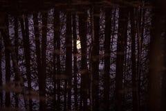 La luna se refleja en el agua a través de los troncos y de las ramas de árboles fotografía de archivo